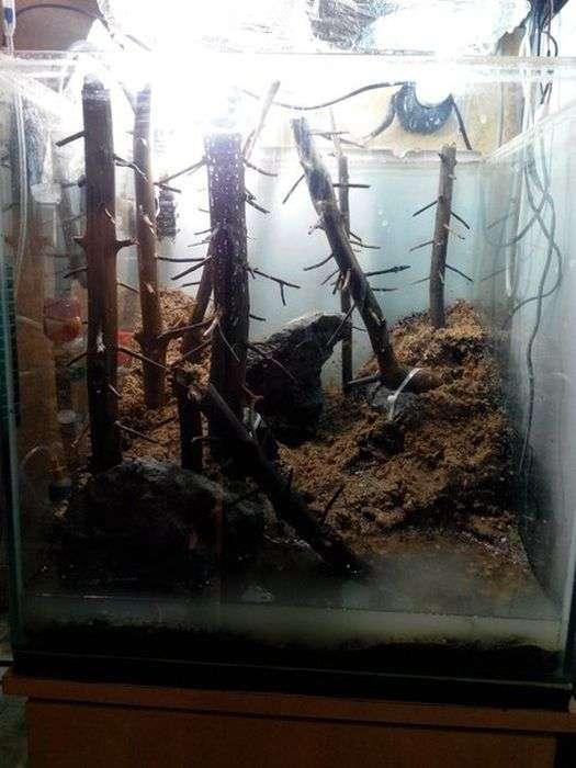 Акваскейп «Сосновий бір» своїми руками (8 фото)