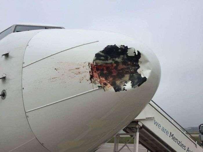 Наслідки зіткнення літака зі зграєю птахів (4 фото)