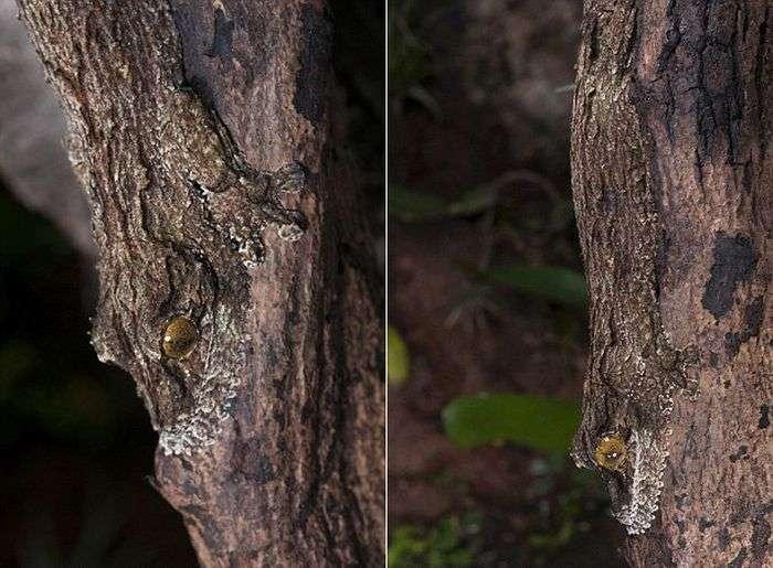 Гекон - майстер маскування (4 фото)