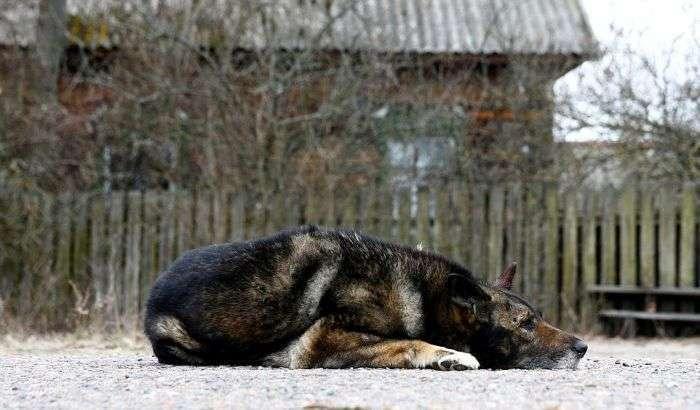 Життя в зоні відчуження Чорнобильської АЕС (19 фото)