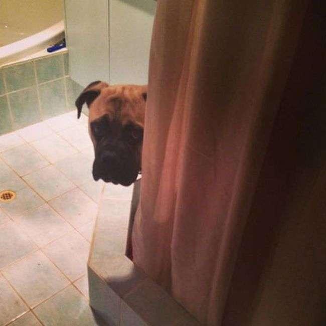 Пес думає, що його не бачать (18 фото)