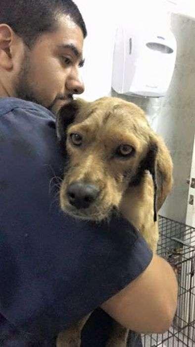 Порятунок собаки з ями з дьогтем (9 фото)