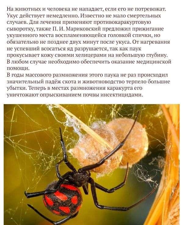 Найнебезпечніші тварини Росії (17 фото)