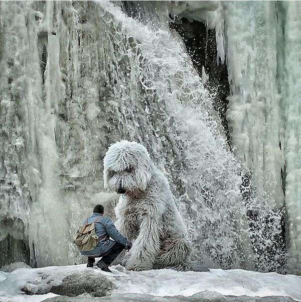 Неймовірні пригоди американського фотографа і його «собаки-велетня» (25 фото)