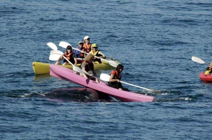 Туристи прокотилися на спині кита (4 фото)