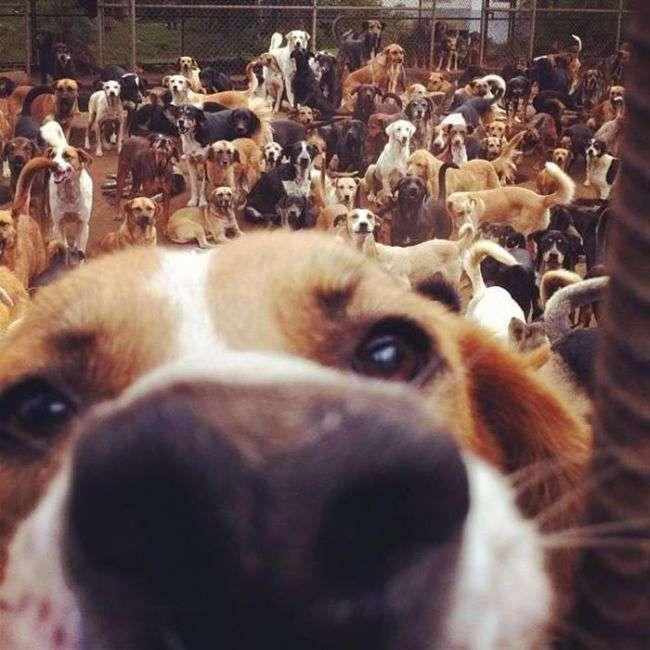 Собачий рай в Коста-Ріці (10 фото)