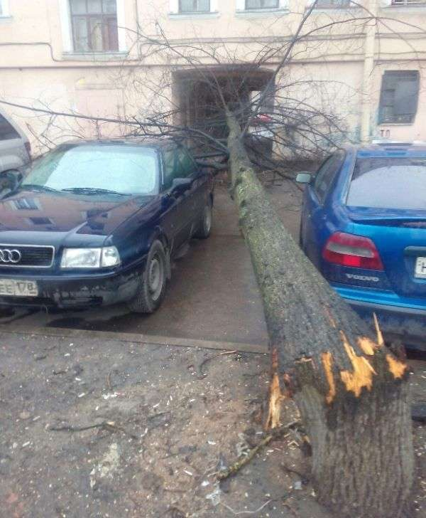 Везучі автомобілісти (2 фото)