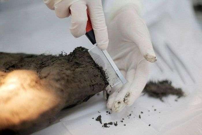 В Якутії знайдено дитинча стародавнього хижака (6 фото)