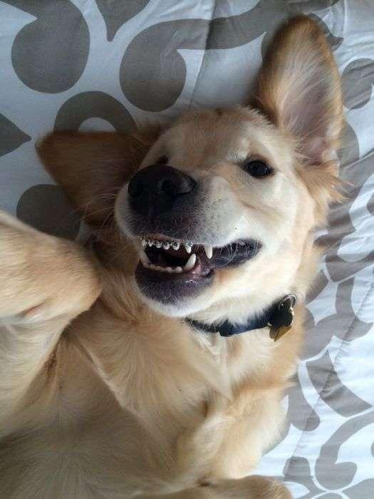 Милий щеня з брекетами підкорив інтернет (7 фото)