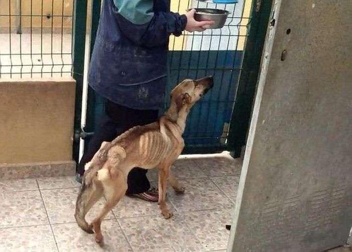 Неймовірне перетворення нещасної собаки (6 фото + відео)