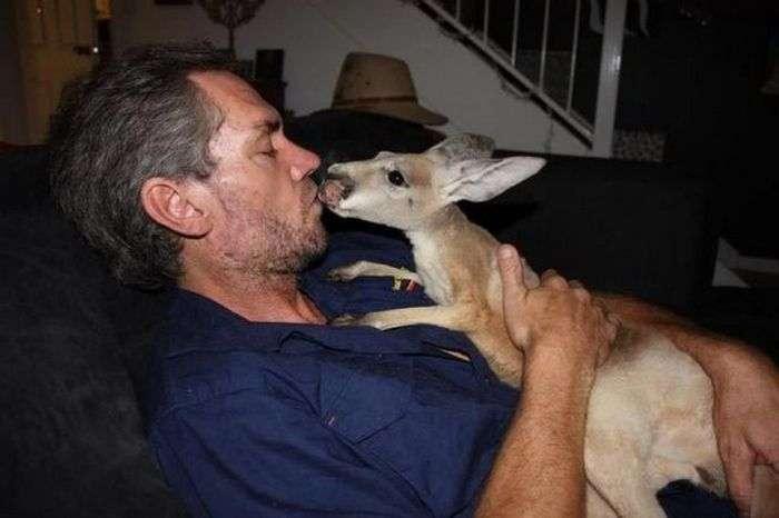 Кріс Барнс - спаситель дитинчат кенгуру (20 фото)