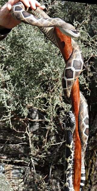 Неймовірно реалістичні тростини у вигляді змій (9 фото)