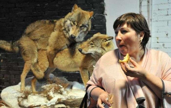У Санкт-Петербурзі відкрилася виставка «Інтимні таємниці тварин» (22 фото)