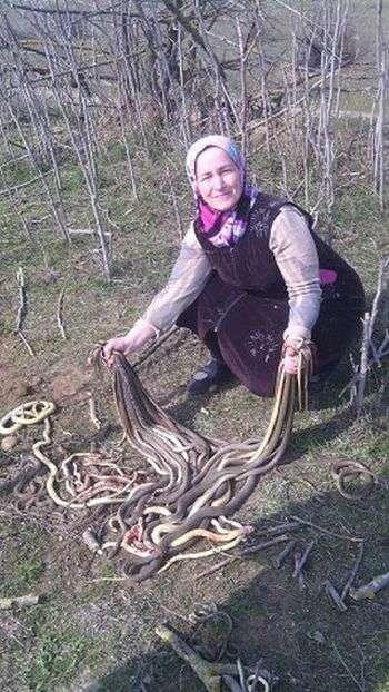 У Дагестані пенсіонерка вбила 80 змій, що оселилися на її городі (2 фото)
