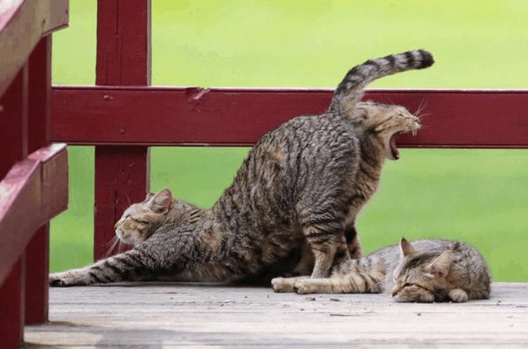 16 фотографий-обманок, которые играют с нашими глазами как кошка с мышкой Юмор
