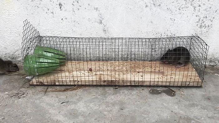 Простая ловушка для мелких грызунов Самоделки