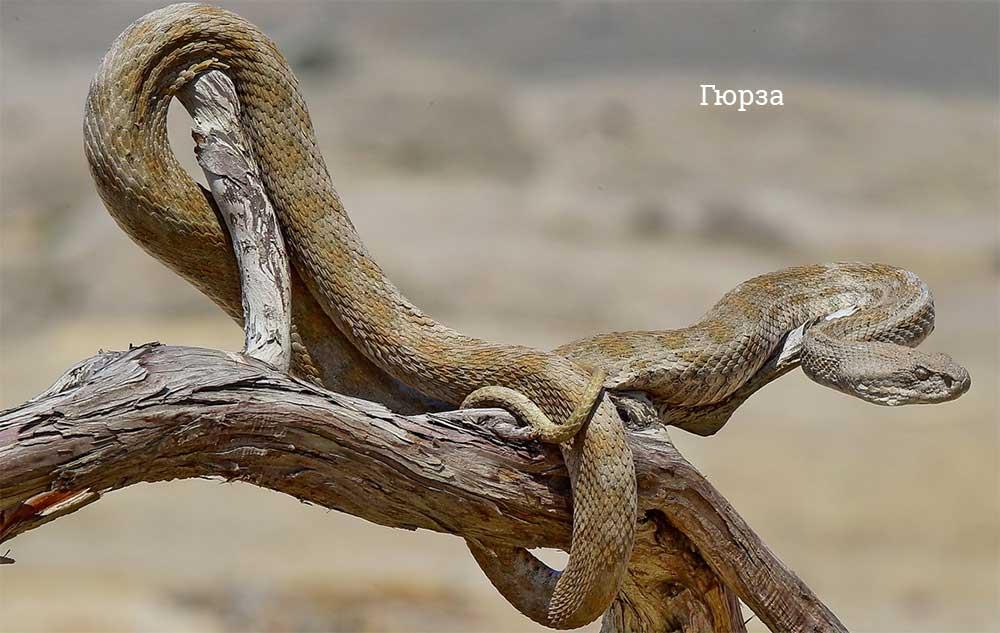 Самые большие змеи в мире – Топ-10 животные