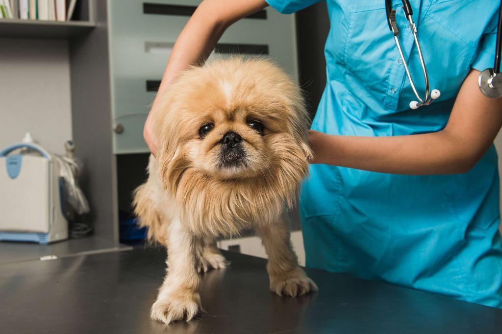 Метеоризм у собаки: причины, лечение, диета, профилактика Животные