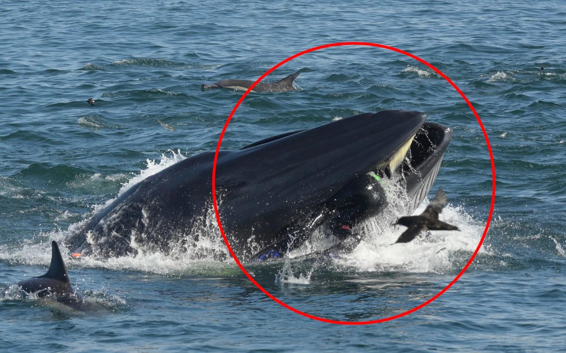 Как кит дайвера проглотил Интересно