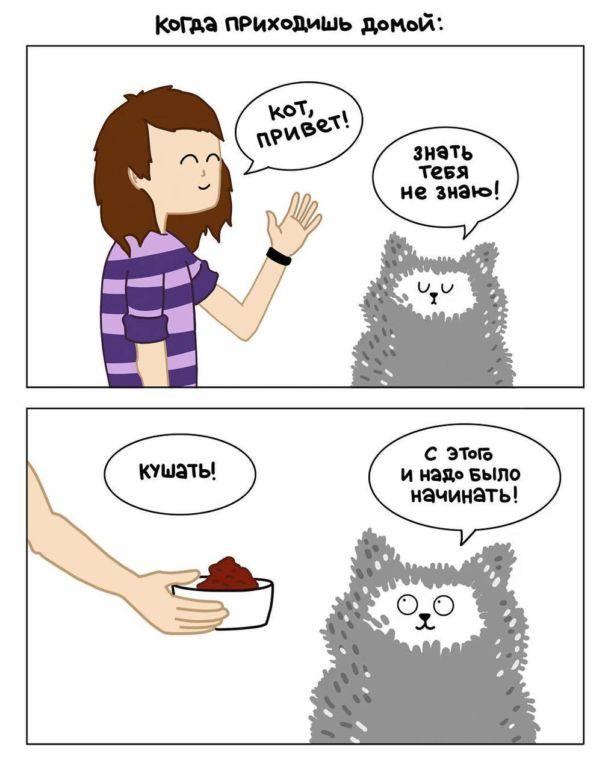 Иллюстратор рисует комиксы о жизни с 4 кошками и раскрывает все их пушистые тайны Юмор