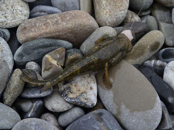 Страсть к рыбалке от мамы Охота и рыбалка