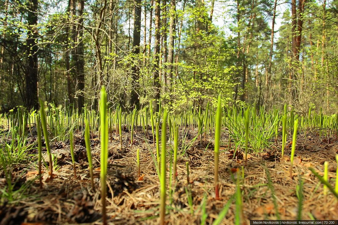 Весна, Рязань, Солотча, Сосновый бор, Шишкин лес фотосессия