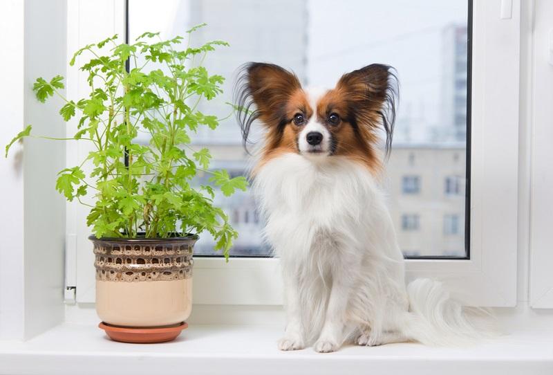 Рейтинг самых легко обучаемых пород собак Вдохновение