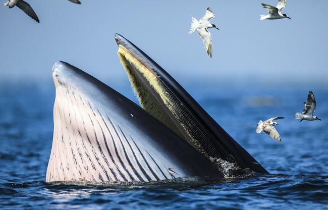 Дайвера из ЮАР чуть не проглотил кит как библейского Иону Животные