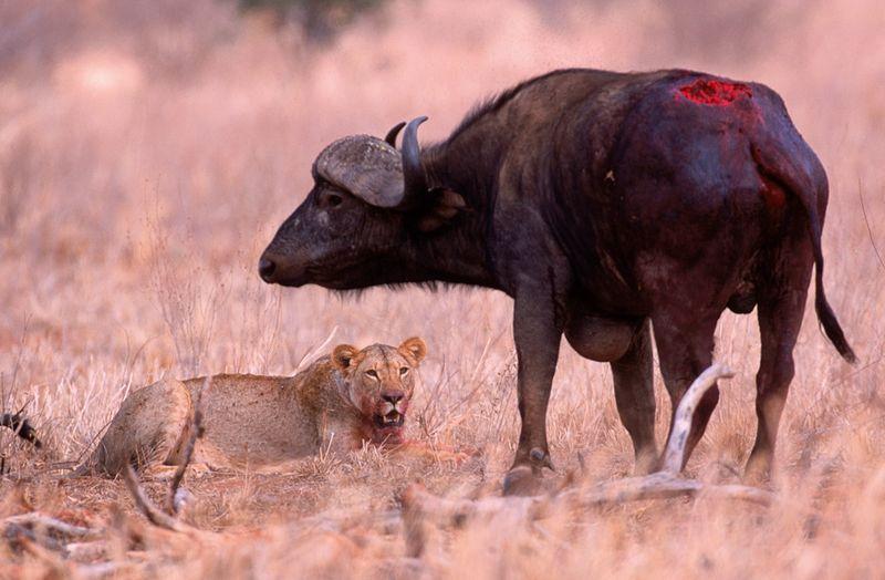 Самцы паразитируют на самках: 5 примеров из дикой природы Животные