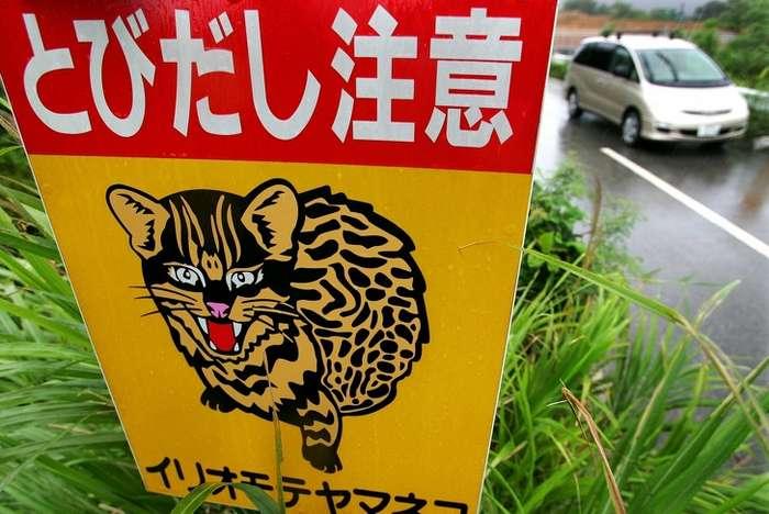 ВЯпонии есть целый остров, населенный котами, ипосмотреть нанего едут туристы совсего мира Интересное