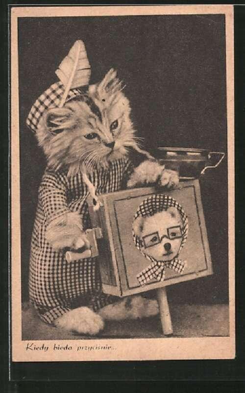 Ретро-фото с котиками Интересное