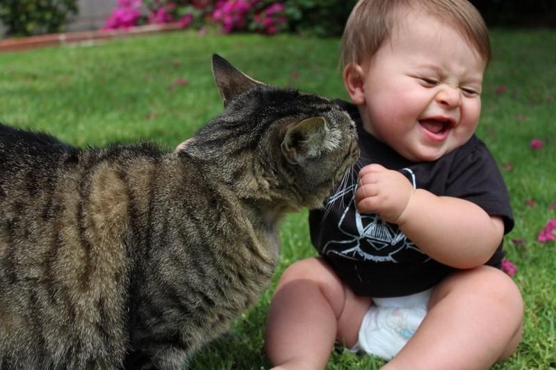 23 очаровательные фотографии, доказывающие, что вашему ребенку нужен кот Животные