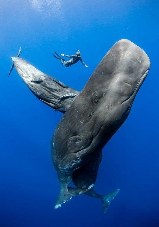 Самое загадочное животное планеты Земля животные
