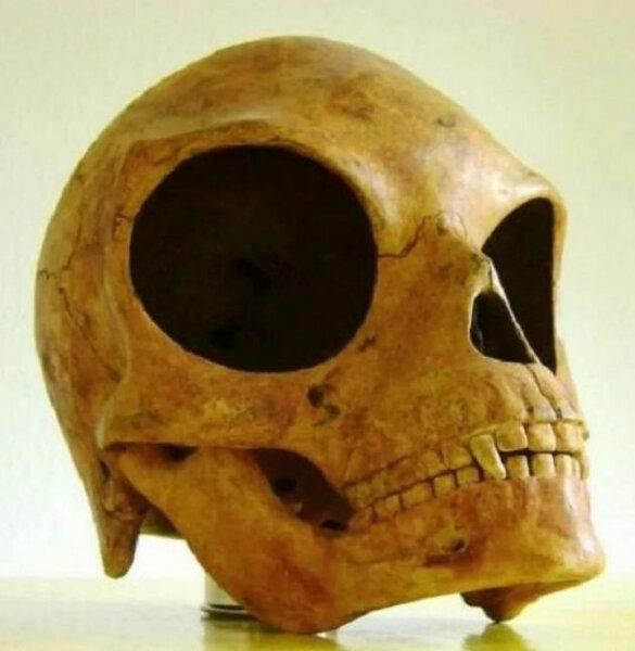 Силендский череп – загадка прошлого, над которой ученые ломают голову до сих пор