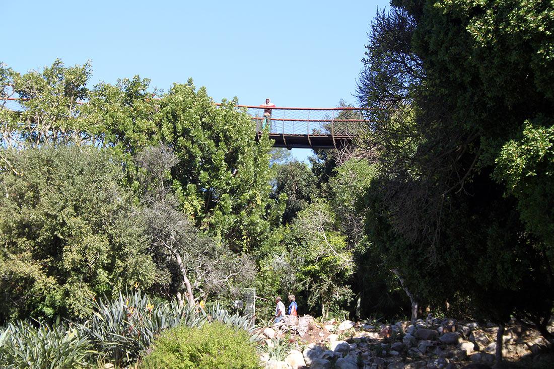 Сказочная дорога над деревьями — одно из самых уникальных мест в Кейптауне авиатур