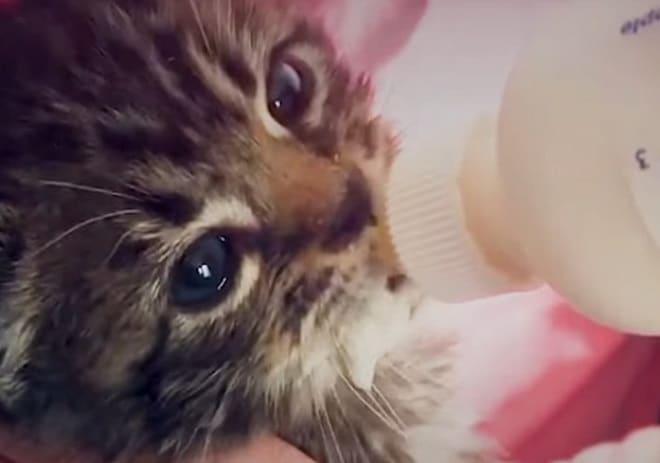 «Только не плакать!» — говорил мужчина котенку