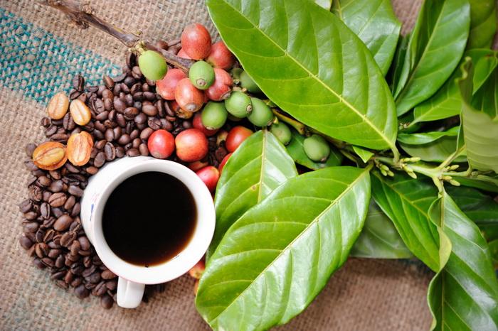 Чем вреден и полезен кофе? Юмор