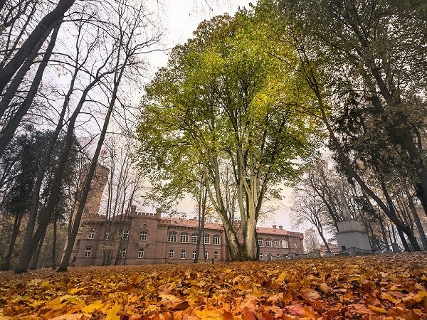 15 деревьев в Европе с интереснейшей историей деревья