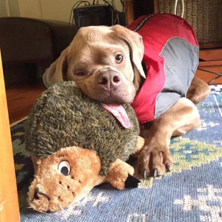 Некрасивая собака, которая сумела найти хозяев картинки