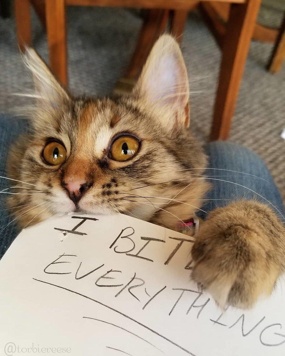 Сложная судьба маленькой кошечки! супер