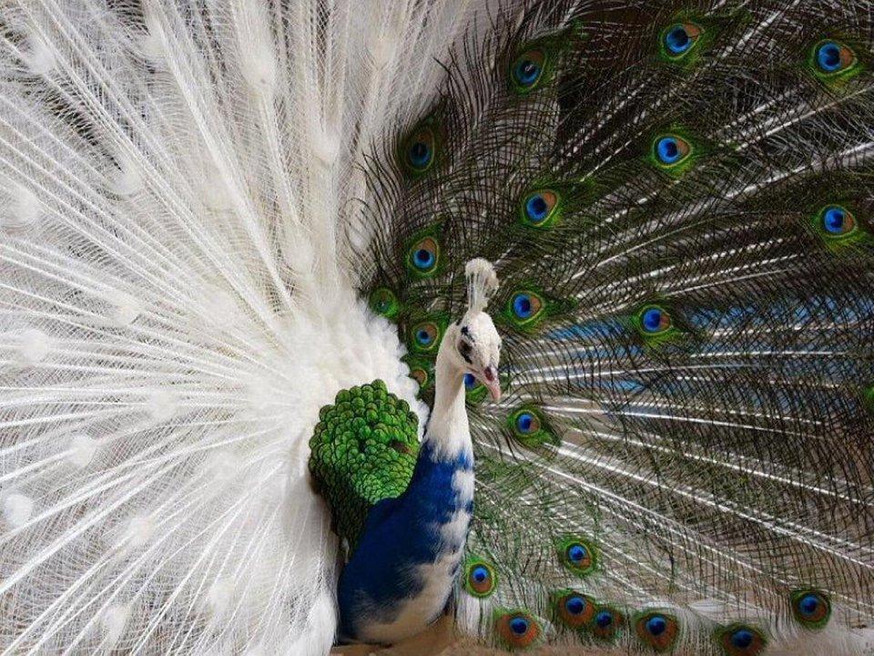 Необычная расцветка этих животных удивляет картинки