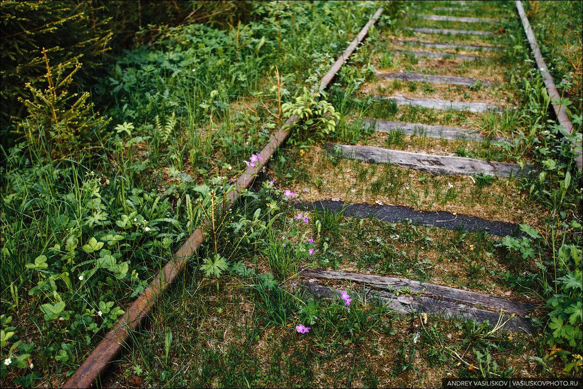 Заброшенный железнодорожный мост в Новгородской области: шедевр промышленной архитектуры автотуризм